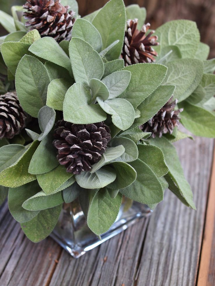 sage and pine cones