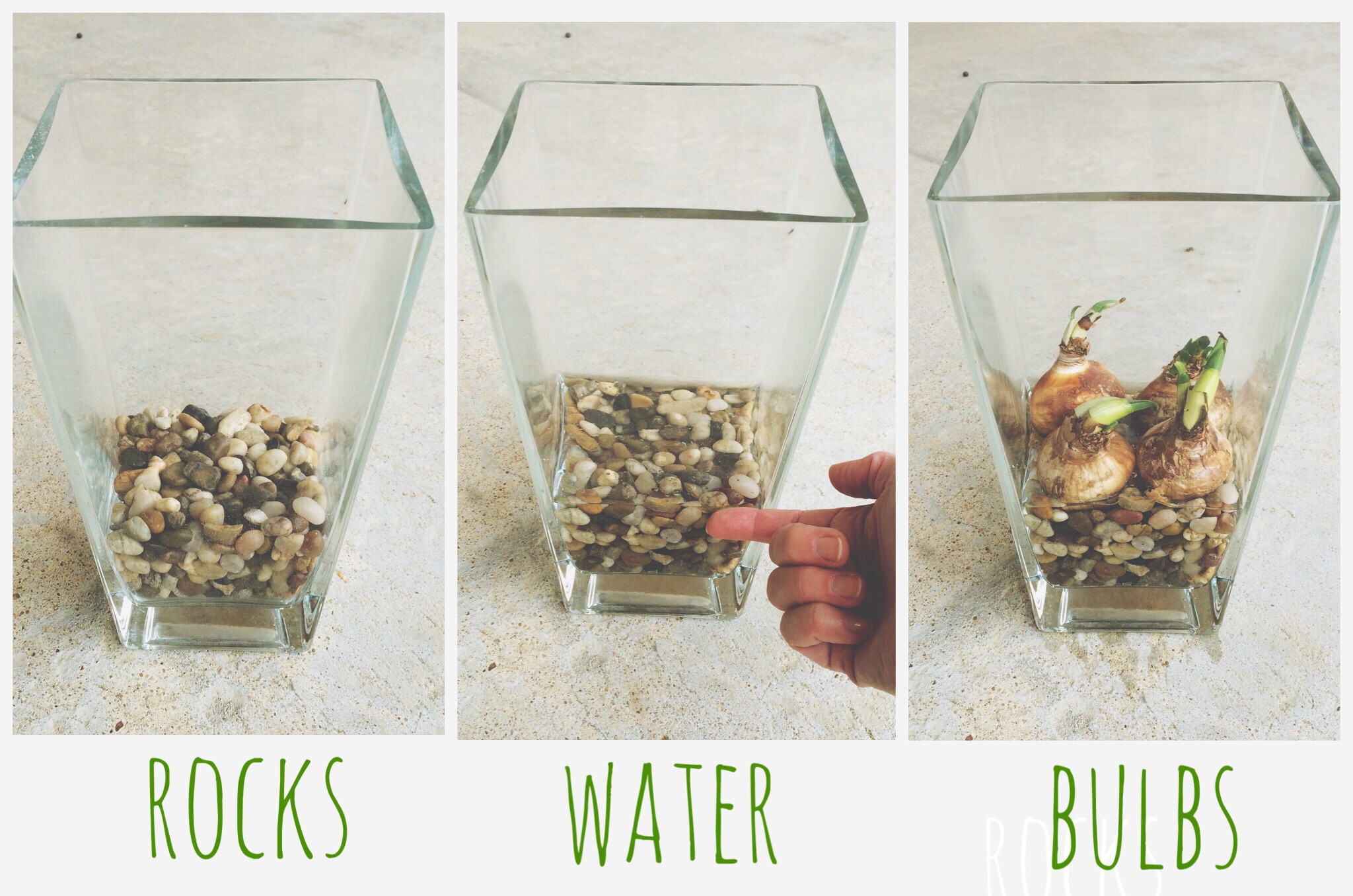 Planting archives the neat nook planting bulbs in water reviewsmspy