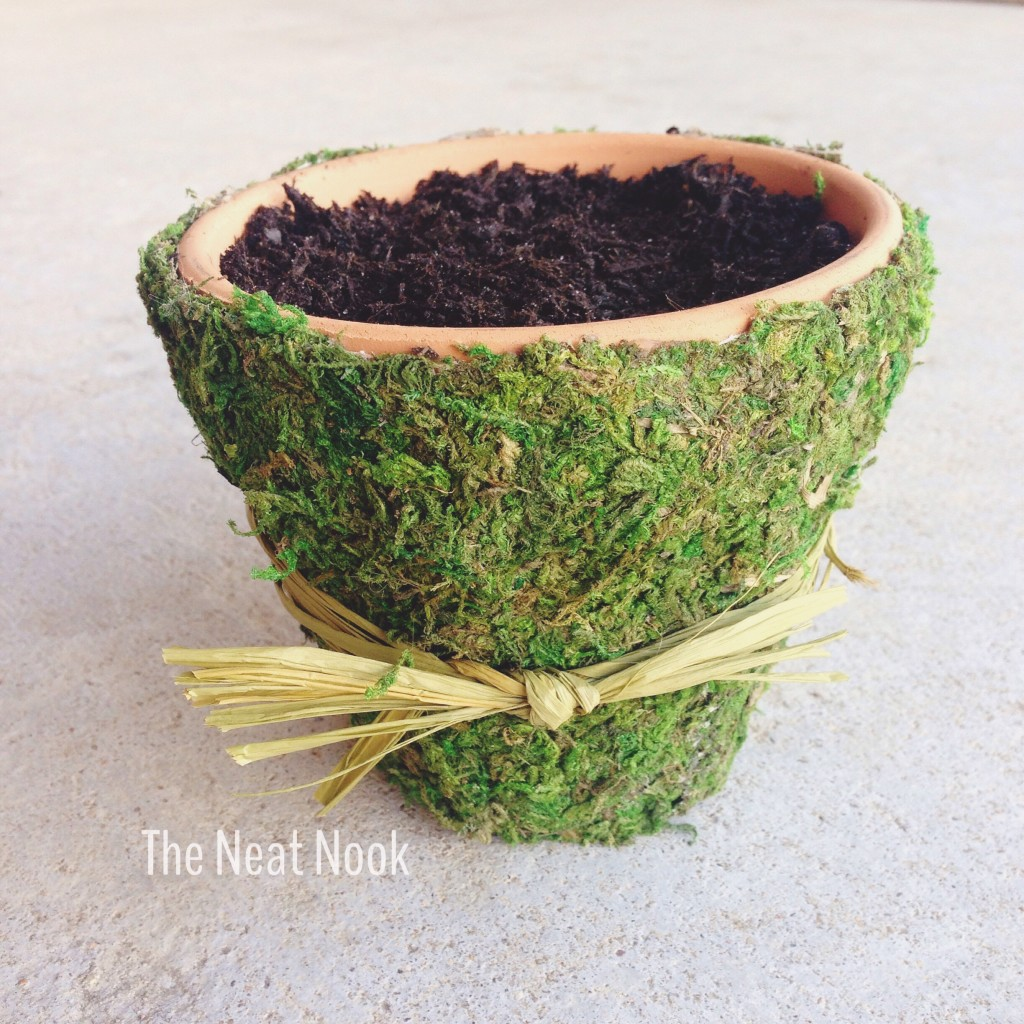 Finished moss pot