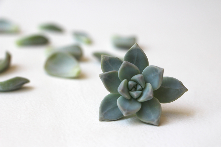 succulent-how-to-propagate-succulents-from-leaves-and-cuttings-needlesandleaves_net