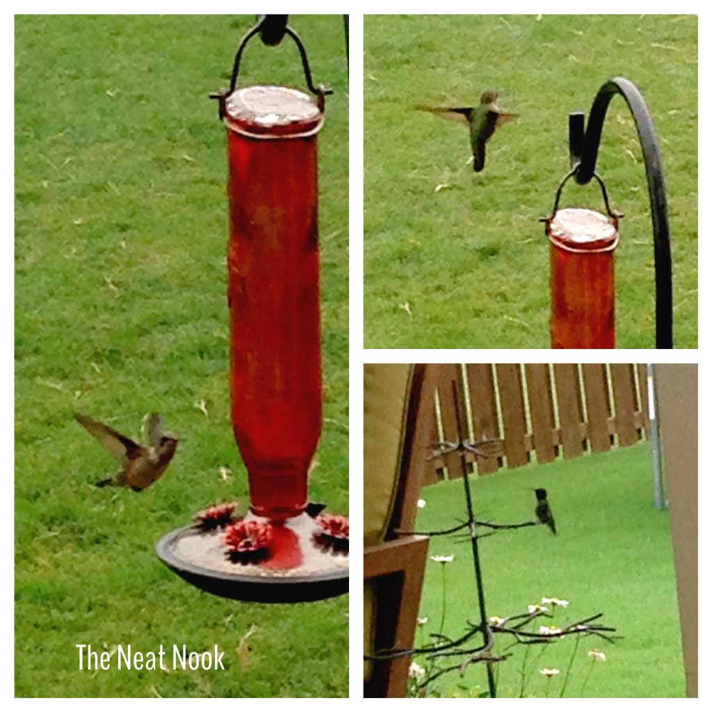 The Hungry Little Hummingbird