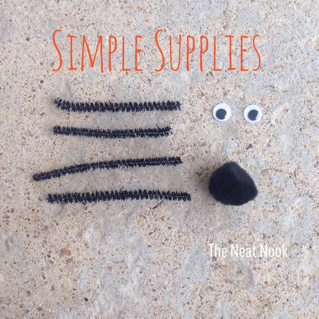 spider supplies