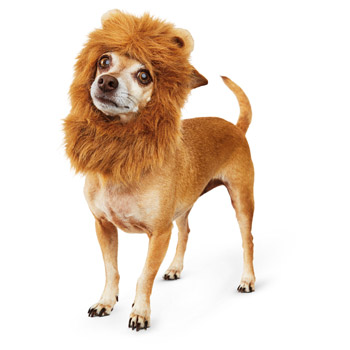 Lion costume for puppies