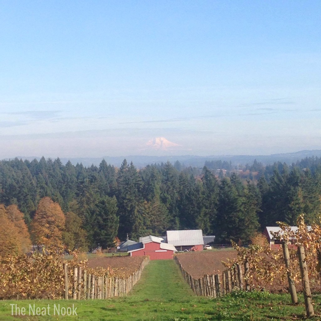 Hawk's View Vineyard