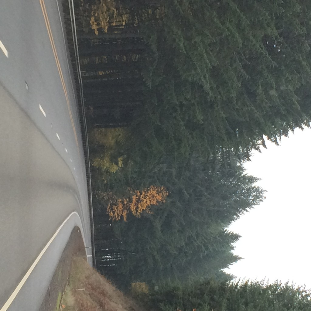 oregon trees
